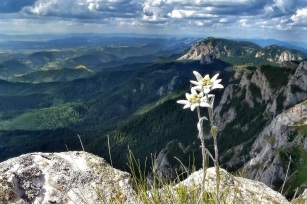 edelweiss-wallpapers